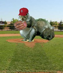 Redbird squirrel