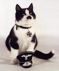 hitler-kitty