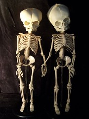 skelefriends 1