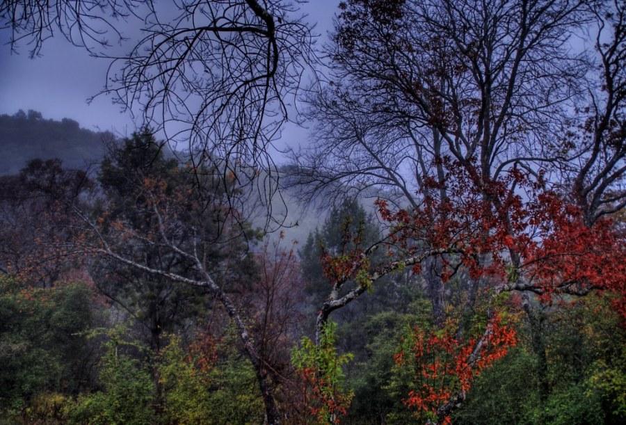 Foggy Morning in the Backyard