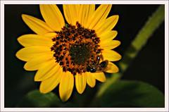 Honey, will you 'bee' mine?