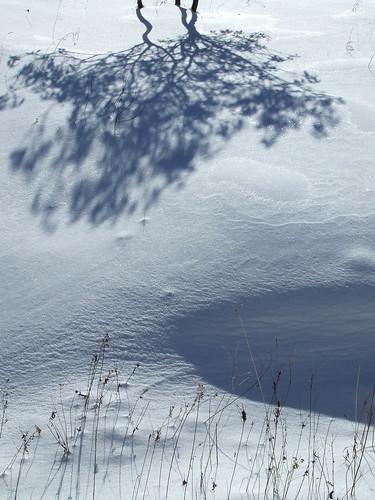 laurel shadows on powerline