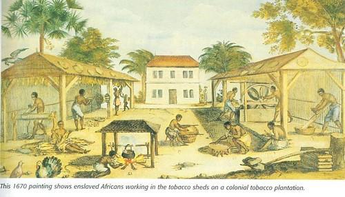 Tobaksplantage