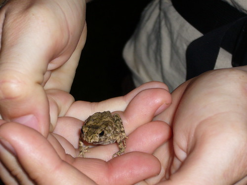 Francie (hearts) frogs