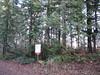 JF46 Cedar Stand