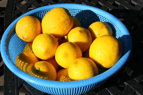 fresh meyer lemons from the backyard