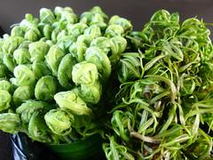 Edible Ferns