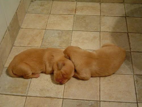 Maia´s puppies