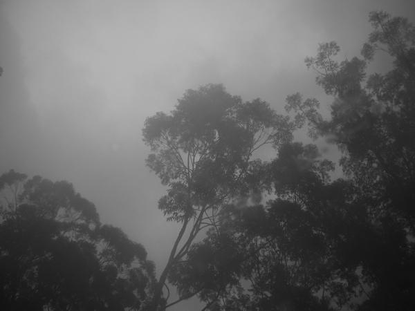 murky trees 2
