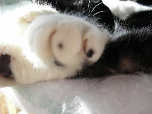 My paw spots
