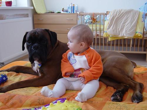 Dog nurse VI