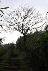 陽明山-小油坑�道