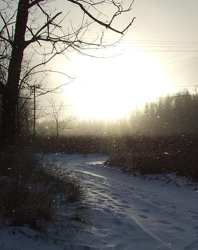 sun through falling snow