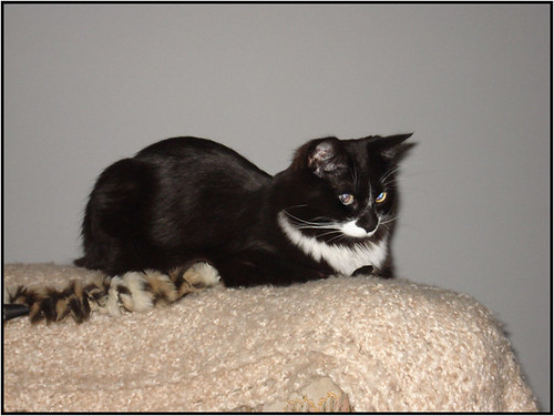 Bandit the cat