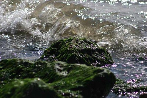 Water - Wave on Stones - North Sea - 1