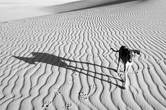 Niger Desert Dog