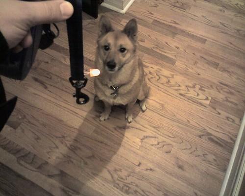 LED throwie dog leash modification