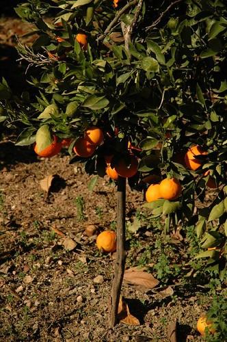 El milagro naranja