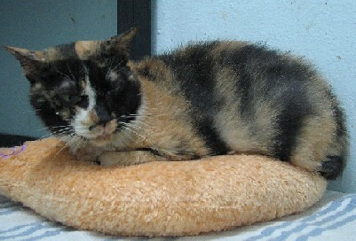 Cattery_FivCats_20070101_02x