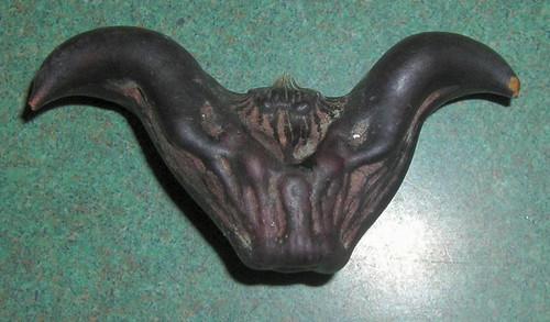Close up of the demon nut  (Trai Au)