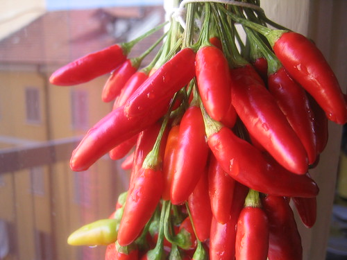How to Make Hot Pepper Chili Oil – Ms  Adventures in Italy