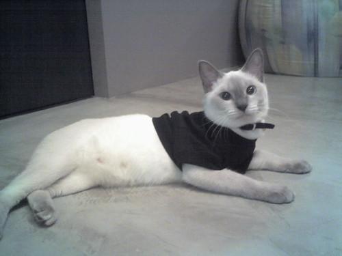 26-11-06_Cind Tshirt Pose