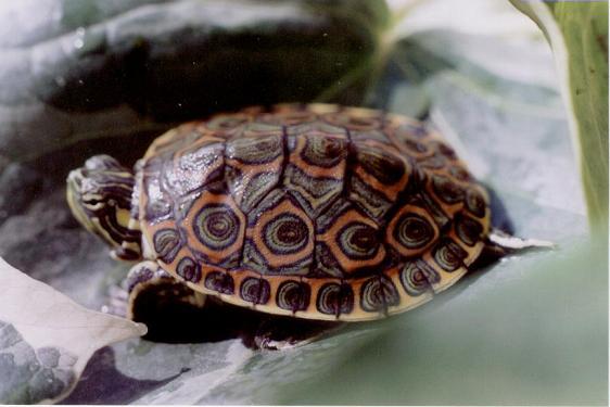 Tortugas Acuaestanques