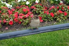 bird, birds, birding, birdwatching, bird watching, wild birdwatching, wild bird watching