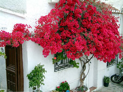 Salobrena-Andalucia, Spain