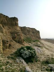 Bulverhythe Cliffs