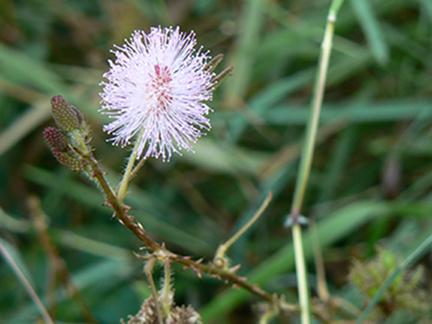 wildflower11