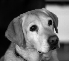 Grieving Loss Of A Pet