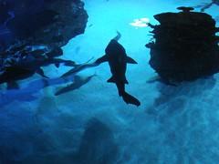Shark Tank 6