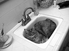 Stinky discovers the sink.....IMG_0928