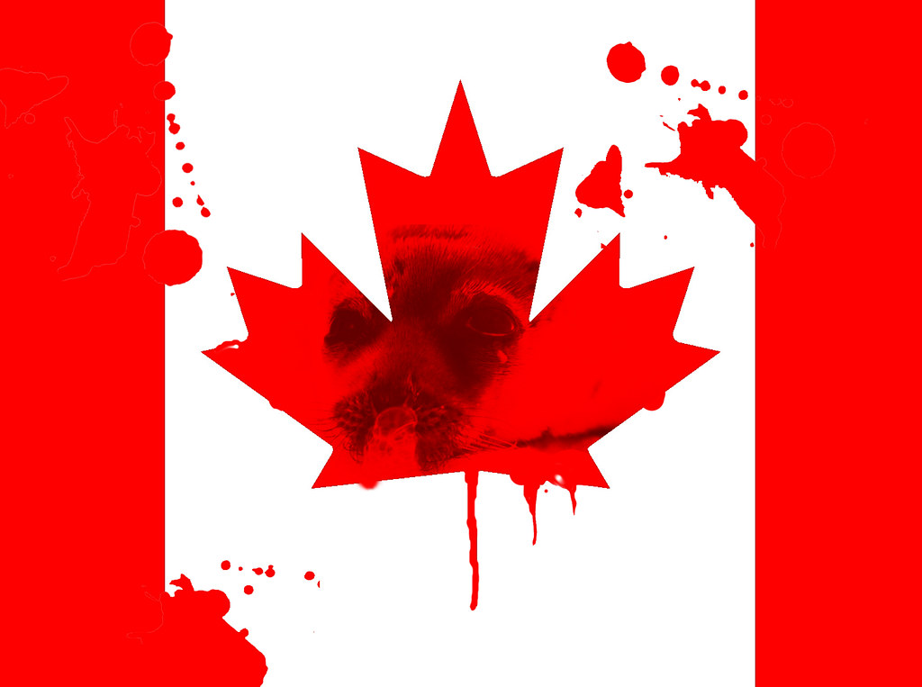 Canada Flag in Seal Blood