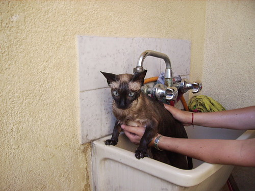 Sofia, Siamese kat wassen! Hoera!