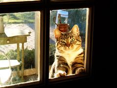 Outside Looking In