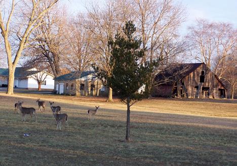 Deer & Barn