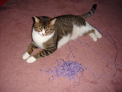 Milo vs the yarn