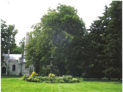 Fern-leafed-Beech---tree_sm