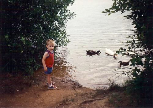 Feedig ducks