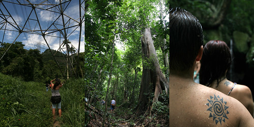 Floresta da Tijuca