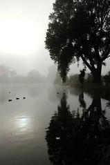 Foggy morning/Hagley Park