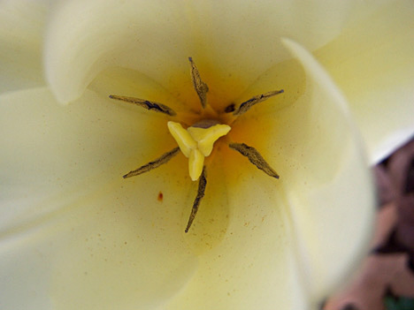 White Tulip Center