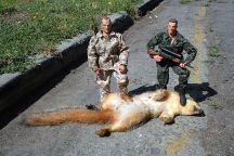 resized hunters
