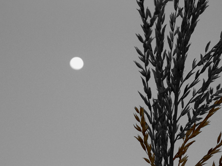 moon3