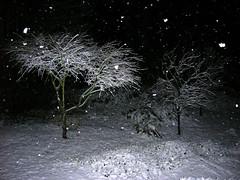 Sammamish Snow