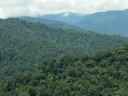 Bosque Protector de Palo Seco y Parque Internacional La Amistad