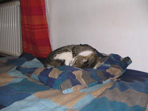Pillowcat