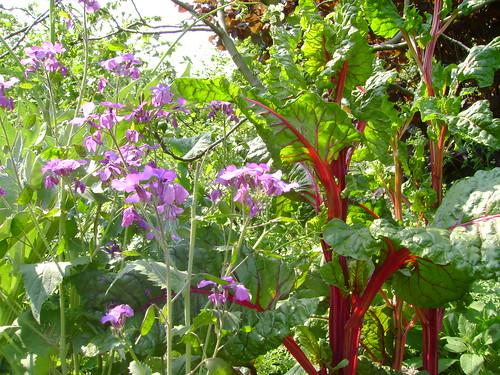 forest garden abundance